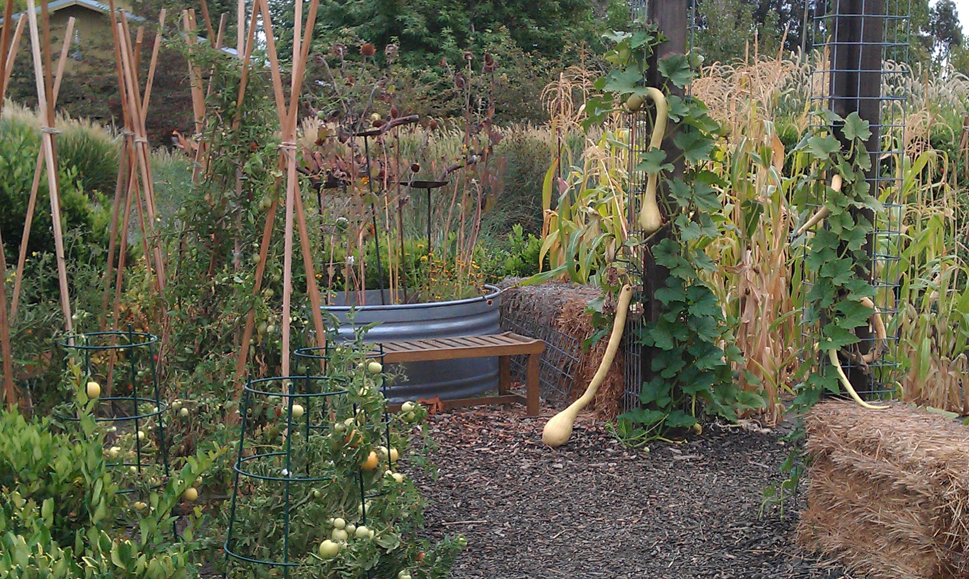 Tracy McCabe Stewart Art Blog Gardens